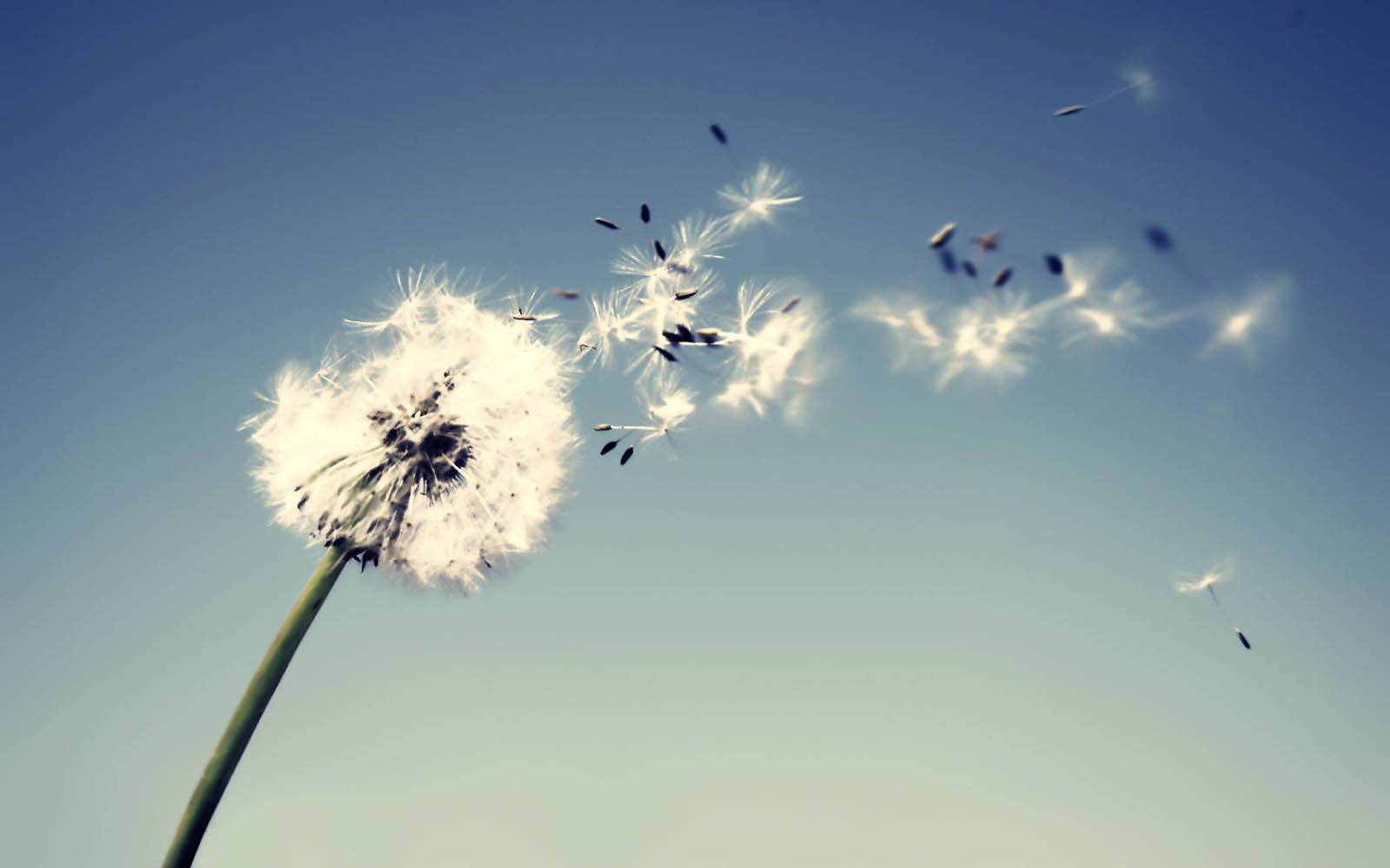 Dandelion-Flowers-happy-positive-habits-challenge-change